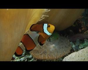 Ein ganz bekannter Fisch....
