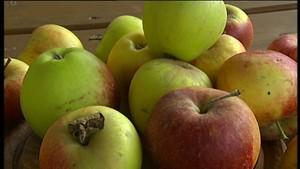 Nordthüringer Fernsehen: Äpfel für den Balkon