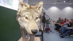 Thüringen TV - Jena TV - Der Wolf in Deutschland