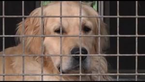 Welttag des Hundes