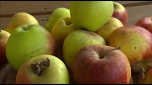 Tag des deutschen Apfels