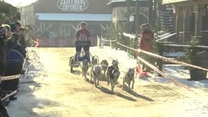 Schlittenhunderennen im Harz - RFH - Deutschland lokal Januar 2016