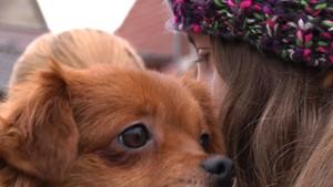 Mahnwache gegen die Massentötung rumänischer Straßenhunde