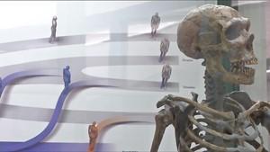 Die Evolution des Menschen - Rückblick auf 7Mio Jahre
