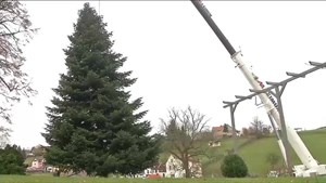 Deutschlands bekanntester Weihnachtsbaum