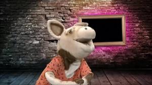 Das Schwein ist eine Diva