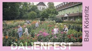 Dahlienfest in Bad Köstritz
