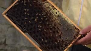 Bienengarten in Oßmannstedt