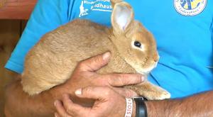 Der Kaninchenzuchtverein T 11 Arnstadt e.V.