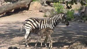 Nachwuchs im Thüringer Zoopark Erfurt