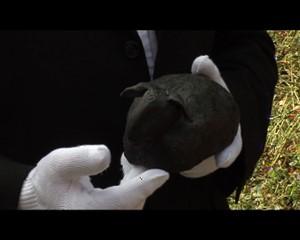 Jena.TV: Schwarzes Schaf der Denkmalpflege