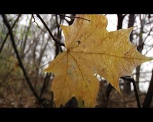 Der Herbst - ein Spaziergang