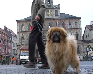 Erste Hundezählung in Weimar