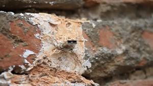 Deaddrops - geheimer Stick im Mauerwerk