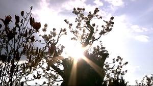 Spurensuche Tod - Bestattungsinstitut Meisezahl (ganzer Film ca 16 Min)