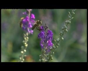 Zu Gast im Bienenmuseum