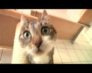 Internationaler Tag der Katzen
