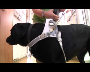 Der Blinden- und Sehbehindertenverband Erfurt stellt sich vor