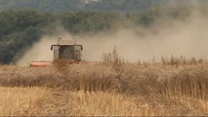 Jena.TV: Sommerzeit bedeutet Erntezeit