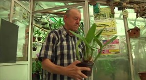 Orchideen Spezialist Rudi Bradler