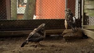 Spatenstich im Tierpark - RFH - Deutschland lokal Februar 2016