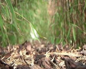 Das Bambus-Zentrum in Kleinobringen