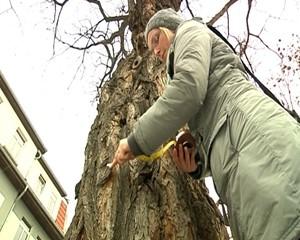 Die Fachfrau für Bäume aus Arnstadt