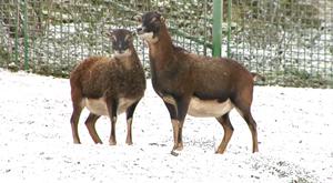 Der Tierpark Fasanerie in Arnstadt